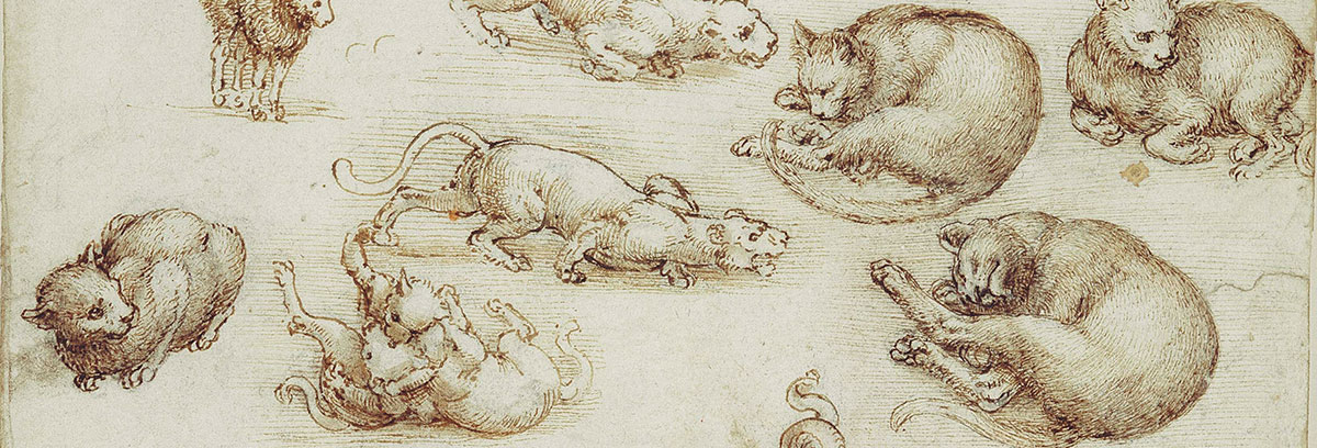leos cats